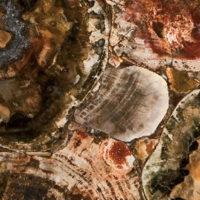 8330-Petrified-Wood-full